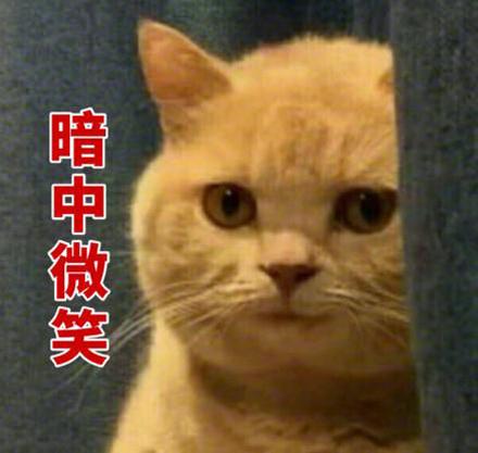 律师函_大橘为重是什么梗_大橘为重意思、出处、含义介绍_游戏吧